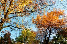 Goldener November - Jahreszeiten - Galerie - Community