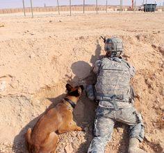 Military War Dog Poster
