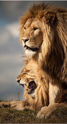 Kings of the Beasts.