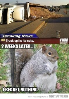 You go squirrel, you go squirrel.