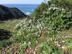 Biodiversität der Westküste - portu.ch . … Continue reding →