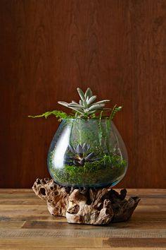 How to make an amazing terrarium | west elm