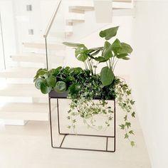 http://www.fermliving.com/webshop/shop/green-living/plant-box-black.aspx
