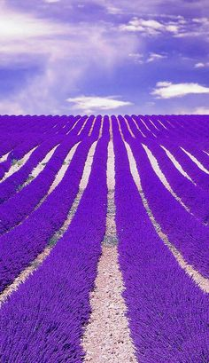 10 Most Beautiful Places To Visit Before You Die! Lavender Fields in France
