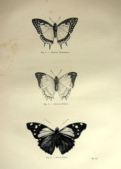 Beautiful Antique butterflies print 1860 by LyraNebulaPrints, $24.95