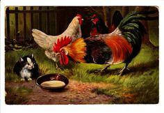 Rooster Chicken Hen Cat Kitten Farm Postcard | eBay