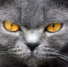 Grey Cats -- Mean Business...
