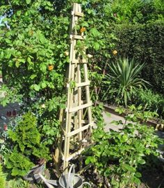 This Trellis Obelisk, measuring 1.8m in height, provides stylish support for climbing fruit and veg such as runner beans and tomatoes. #GrowYourOwnVeg