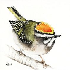 ARTFINDER: Firecrest by Karolina Kijak -  Original watercolors of Firecrest Paper 300g  100% cotton, high quality pigments size 18x18cm  Follow me on facebook: https://www.facebook.com/kijakwate...