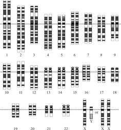 The human genome is the complete set of genetic information for humans. It includes both protein-coding DNA genes and noncoding DNA. Haploid human genomes (contained in egg and sperm cells) consist of three billion DNA base pairs, while diploid genomes (found in somatic cells) have twice the DNA content.