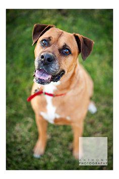 Pet Photography at Anthony Photography Ohio