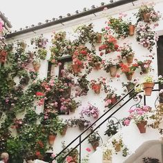 wall of potted plants