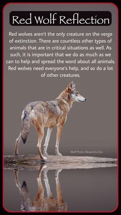 """Mitch Rand's """"reflection"""" about endangered species. Thank you, Mitch!"""
