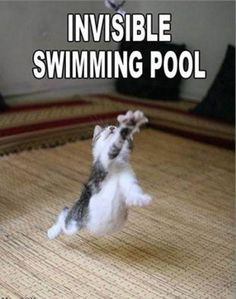 pictures of animals with captions | ... Awww: Cute animals + captions = win! (35 photos) » cute-captions-28