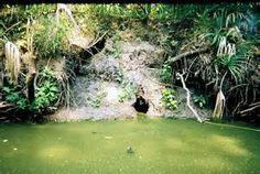 crocodile burrows