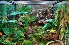 Whites Tree Frogs Vivarium