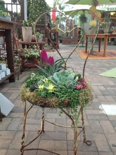 Created by Chicweedgirls: We found this great heart shaped chair and planted it up with some gorgeous succulents and tillandsia's. We have done several custom ones that clients have provided their chair and we work our magic. Jon meticulously creates a wi Succulents In Containers, Cacti And Succulents, Planting Succulents, Succulent Gardening, Container Gardening, Organic Gardening, Garden Chairs, Garden Pots, Big Garden