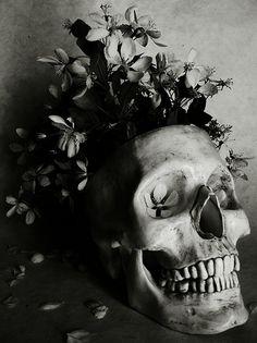 agroma umbria flor, cando xa nada agardemos, cando a humida terra sea testigo do noso descansaso