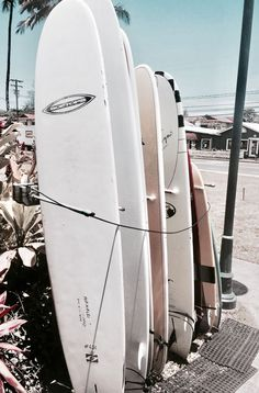 ||hanalei #surf boards||