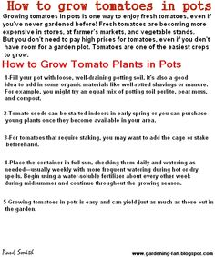 How to grow tomatoes in pots?