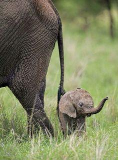 Mama & baby elephant.