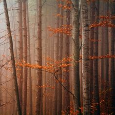 Red Wood by Evgeni Dinev on 500px