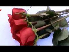 Resultado de imagen para rosas rojas