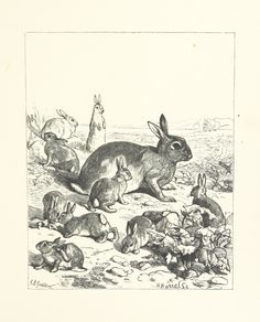 """https://flic.kr/p/hTvsj6 
