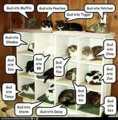 Funny Cats, Funny Animals, Cute Animals, Crazy Cat Lady, Crazy Cats, Dragon Cat, Cat Attack, Rabbit Cages, Cat Jokes