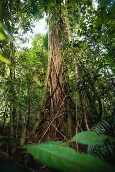 West Mulgrave Falls - FNQ's Best-Kept Secret - Cairns Hiking Guide – We Seek Travel Blog Australian Bush, Hiking Guide, Best Kept Secret, Photography Accessories, Crater Lake, Best Budget, Cairns, Bouldering