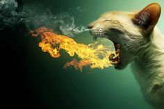 Dragon Kitty. Rad.