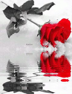 Browse all of the Animated Roses Reflection photos, GIFs and videos. Find just what you're looking for on Photobucket