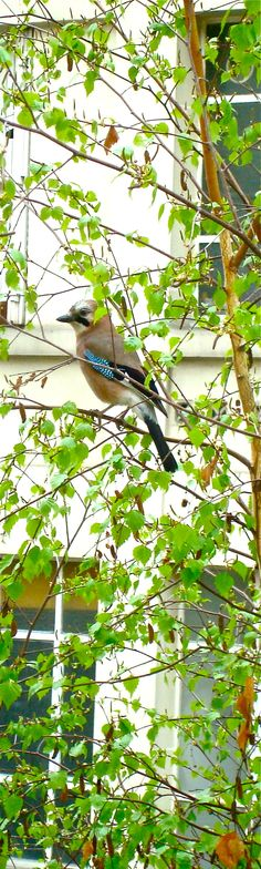 Colors Bird Tree Green Blue © Aurélie Fauré