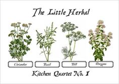 Herbs to grow for edible flowers    Basil  Bergamot  Borage  Briar rose  Chives, garlic  Chives, onion  Coriander  Dill  Elder  Fennel  Rocket  Heartsease  Lavender, english  Lemon balm  Lemon verbena  Lovage  Marjorams  Mints  Oregano  Rosemary  Rose petals  Sages  Shungiko  Sunflower petals  Thymes