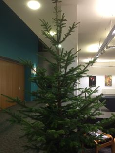 The Christmas tree is here 🎄😀 Short Courses, Orchards, Christmas Tree, Plants, Teal Christmas Tree, Xmas Trees, Plant, Christmas Trees, Fruit Tree Garden