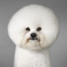 Good Hair Day! Lol