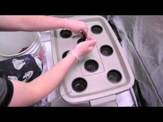 How to plant seedlings in a hydroponics system - YouTube