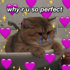 Cute Cat Memes, Cute Love Memes, Crush Memes, Memes Humor, Pin Up Poster, Memes Lindos, Flirty Memes, Cute Messages, Relationship Memes