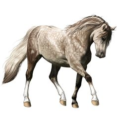 Sierra, Pferd Isländer Hellgrau #10236773 - Howrse