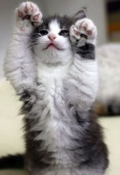 15 Cats That Love Showing Off Their Jelly Beans! – We Love Cats and Kittens
