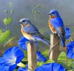Love Birds, Beautiful Birds, Nature Illustration, Bird Drawings, Colorful Birds, Color Of Life, Science And Nature, Bird Art, Blue Bird
