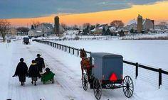 Amish in Winter
