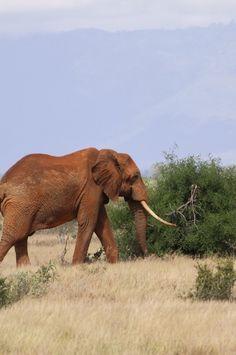 IMG_4648 #wildlife #africa