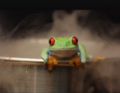Have you heard the anecdote of the boiling frog? Before I tell you about it, please note for the sake of making the article flow, I wrote it from the perspective of the female. So if you are a male...