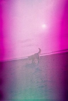 James. Taken using a Blackbird, Fly camera loaded with Konica Centuria Chrome 200 (expired) film. #lomo #lomography #zambales #pink #beach #weekend #analogue #analog #film #sea #sun #october #2011 #dog #dogs #animals #philippines #pilipinas #travel