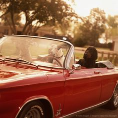 Image Detail For Group Of Dogs In Convertible Car