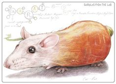 Rob Foote #art #illustration #coloredpencil #colour #pencil #prismacolor #fruit #animal #hybrid #carrot #mouse