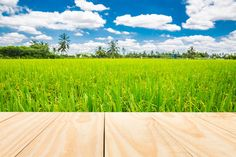 wood table top on rice field by Pushish Images on @creativemarket