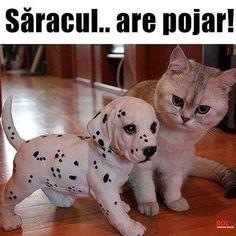 Happy Animals, Cute Baby Animals, Funny Animals, Super Funny, Really Funny, Funny Dogs, Cute Dogs, Real Memes, Animal Jokes