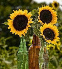 Bottles of sunflowers